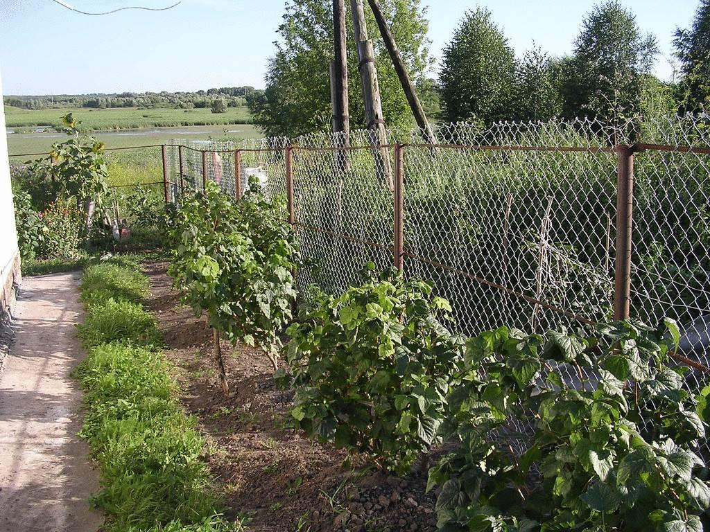 Ограждение для кустов смородины: как его сделать своими руками