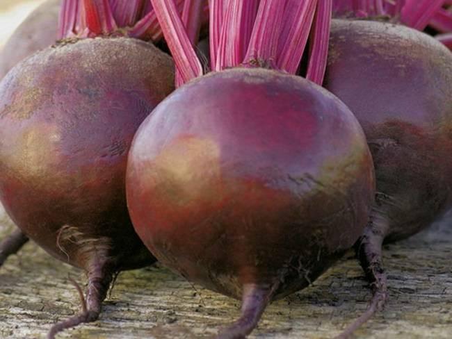 Лучшие сорта кормовой свеклы для подмосковья открытый грунт. семена свеклы: лучшие сорта для открытого грунта на урале и в подмосковье