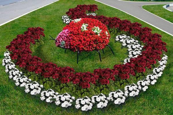 О многолетниках: низкорослых цветах для клумбы, цветущих все лето