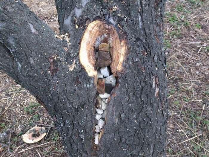 Подробные инструкции с видео, как заделать дупло в яблоне