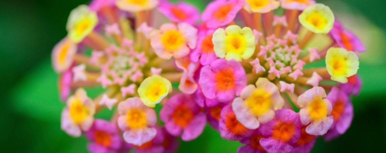 Посадка цветов на рассаду в 2020 году - благоприятные дни по лунному календарю | красивый дом и сад