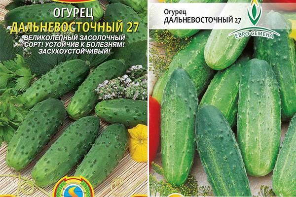 Огурцы: лучшие сорта и гибриды, агротехника выращивания