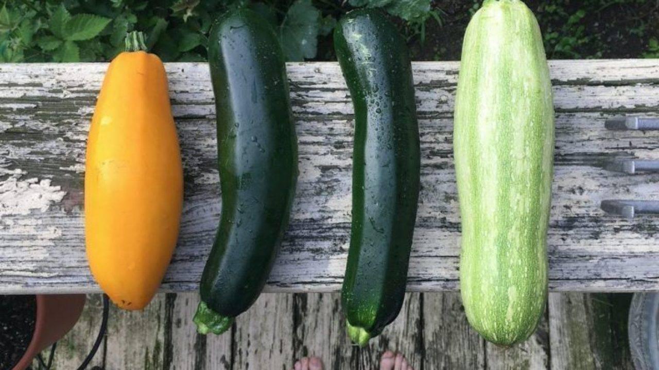 Польза и вред для здоровья кабачков. особенности выращивание в открытом грунте: посадка семенами и рассадой, уход и сбор урожая