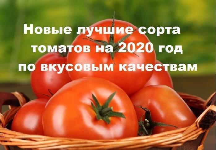 Высокий урожай томатов путем выращивания овоща на двух корнях