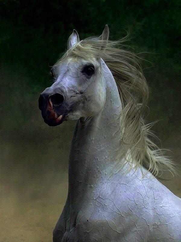 Чистокровная английская порода лошади