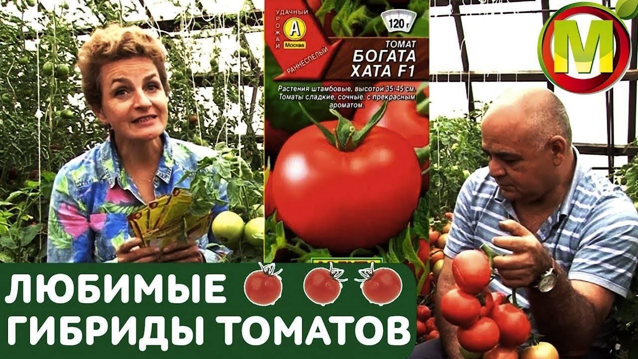 Детерминантный томат «богата хата»: описание сорта, урожайность, особенности выращивания и борьбы с вредителями