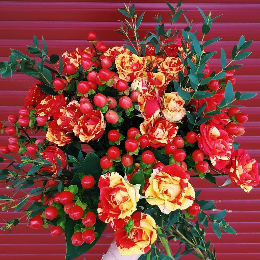 Как вырастить розу роз де решт