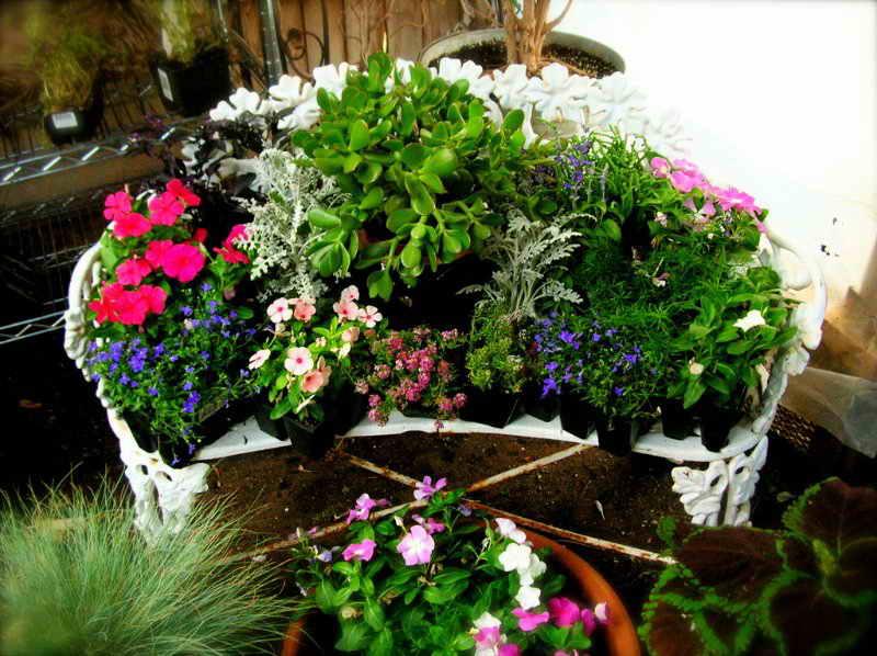 Крокусы после цветения – нужно ли выкапывать, что делать, уход