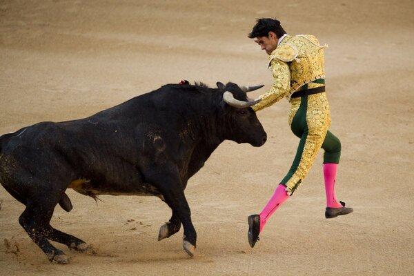 Как кастрировать быков и бычков - wikihow
