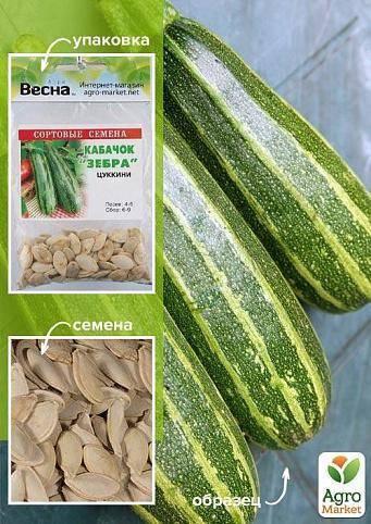 Сорта кабачков: описание с фото, особенности ухода и выращивания