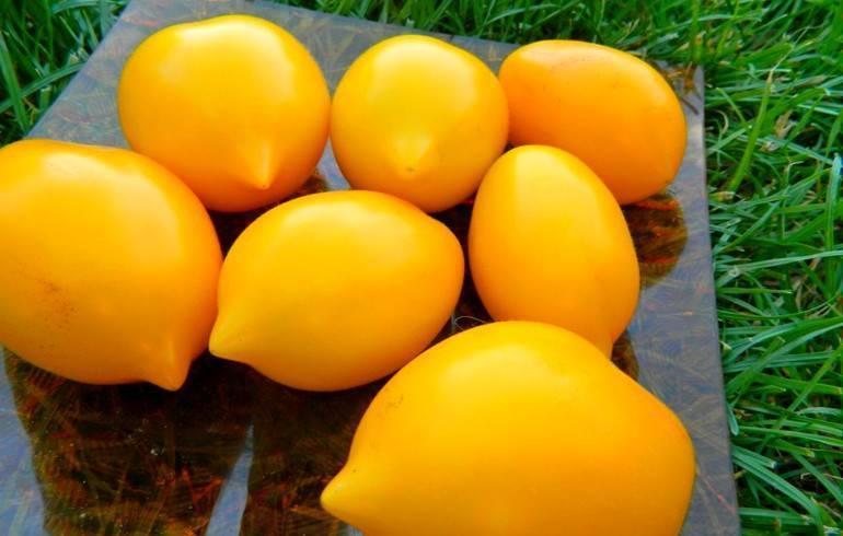 Новые сорта томатов на 2020 год сибирской селекции открытого грунта и теплиц