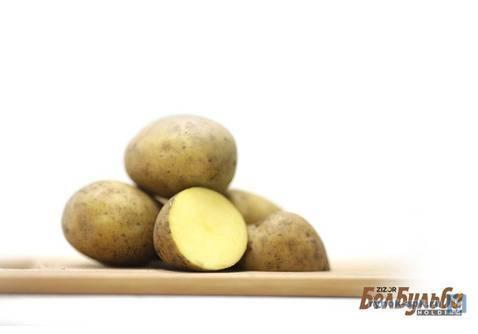 Картофель леди клер: рассказываем вопрос