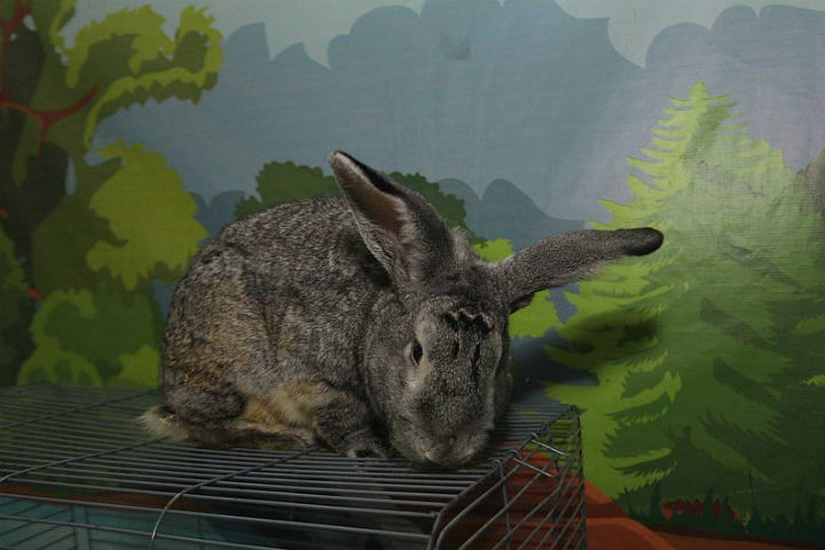 Какой метод выбрать и как правильно забить кролика