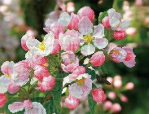 Нужно ли обрывать цветы у яблони в первый год цветения — разбираем со всех сторон
