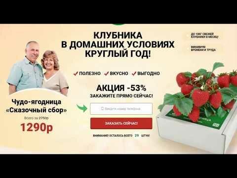 Когда и как правильно обрезать усы у клубники - onwomen.ru