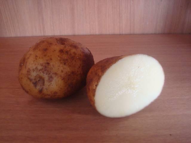 Сорт картофеля «винета»: характеристика, описание, урожайность, отзывы и фото