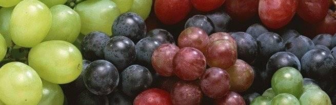 Виноград из косточки, возможно ли вырастить?