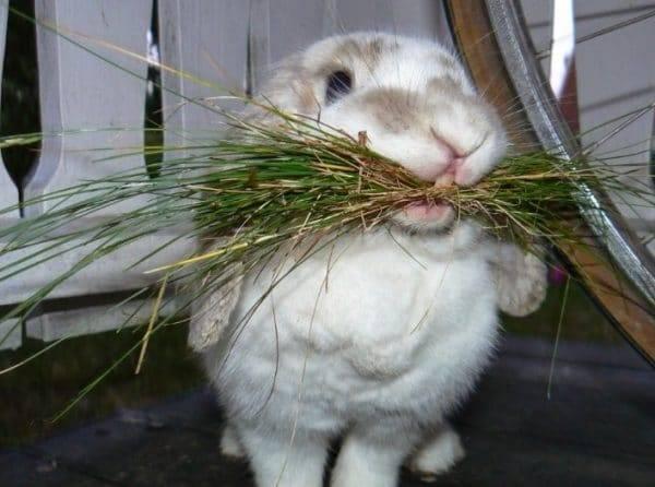 Какие ветки деревьев можно давать кроликам: веточный корм и ест ли вишню и акацию?