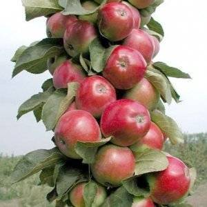 О сортах яблонь: самых хороших и вкусных (сладких, кислых, ранних, поздних)