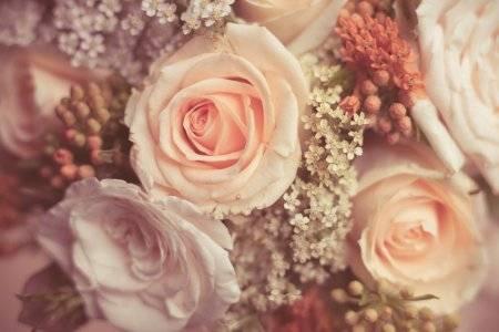 Выбор сортов миниатюрных роз, посадка и уход в открытом грунте