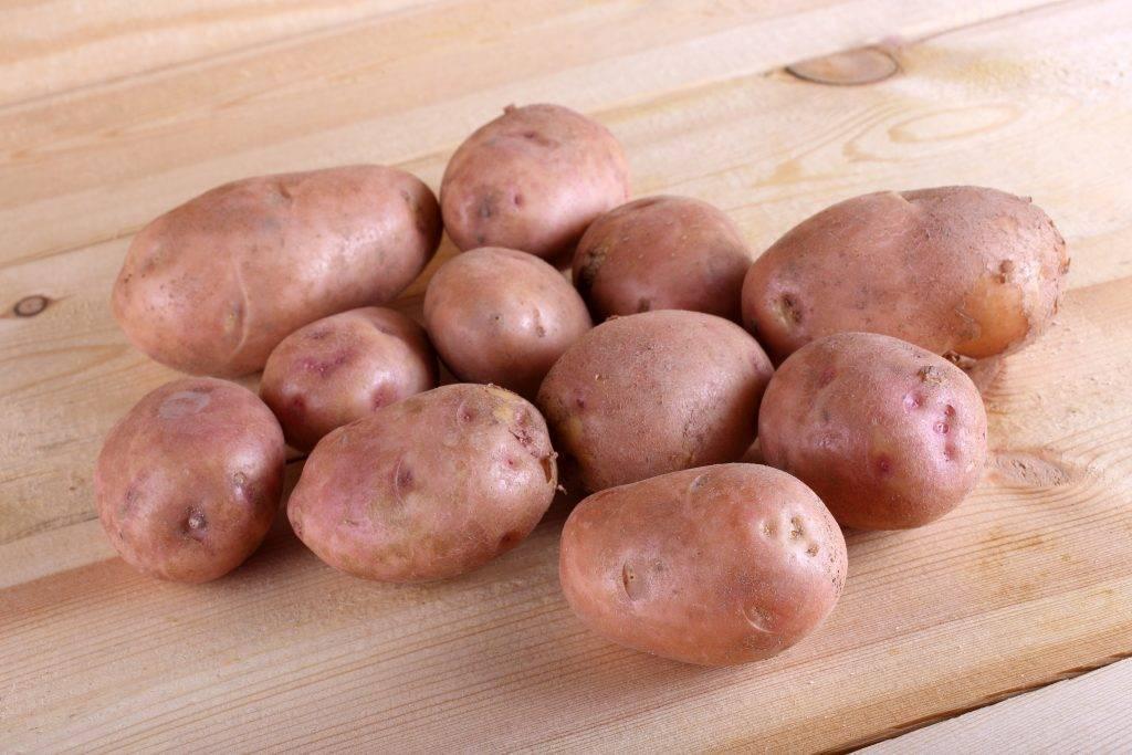 Картофель «чугунка»: описание сорта, фото и основные характеристики