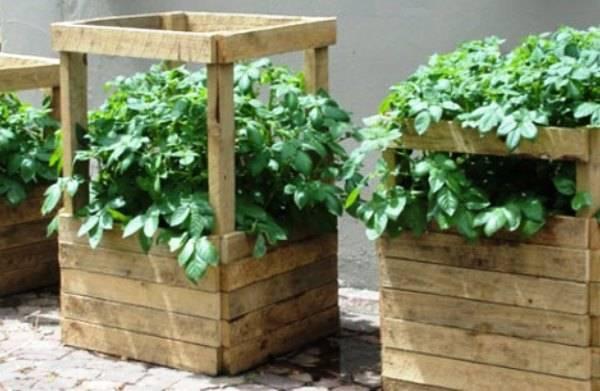 7 способов посадки картофеля – проверено практикой!