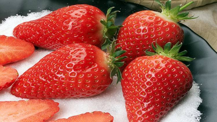 Клубника сорт сирия: перспективная итальянка с ароматными плодами