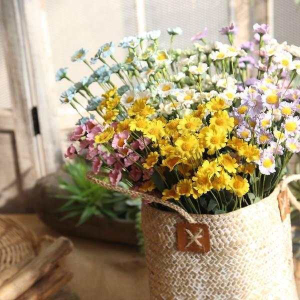 Многолетняя низкорослая гвоздика (40 фото): посадка и уход за садовой карликовой гвоздикой. кустовая «лилипот микс» и другие сорта, особенности зимовки