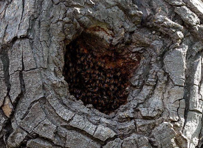 Если в стволе дупло: как помочь дереву