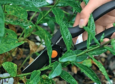 Многолетние флоксы — способы размножения садового растения