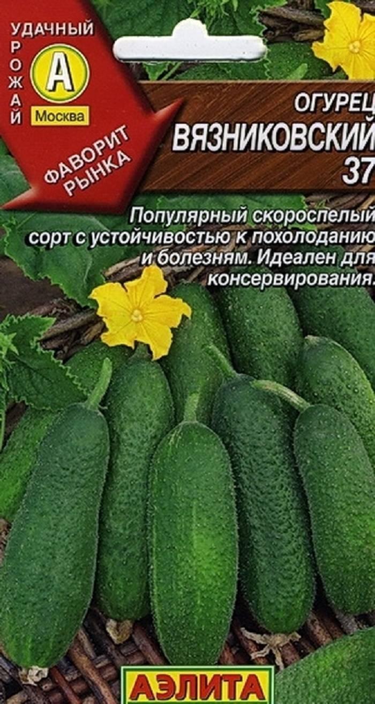 Все о сорте огурцов пуччини: описание, агротехника выращивания и уход