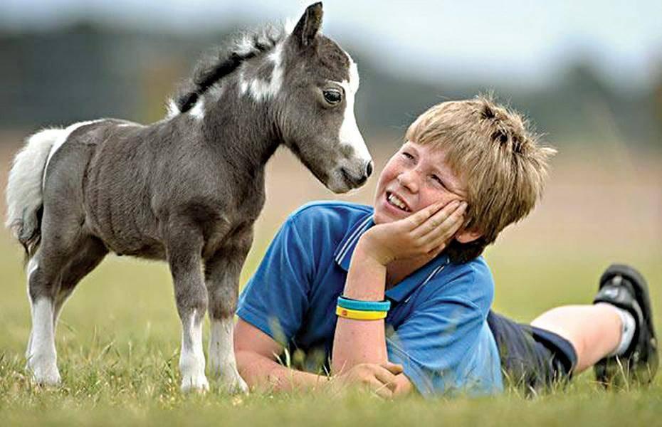 Мини-лошадь — википедия. что такое мини-лошадь