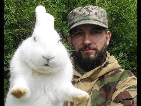 Молочай кроликам можно давать
