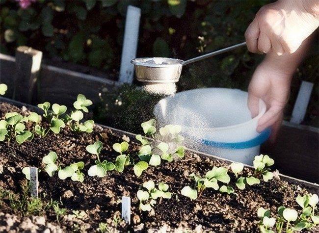 Удобрения для редиски — чем подкормить культуру для налива корнеплодов