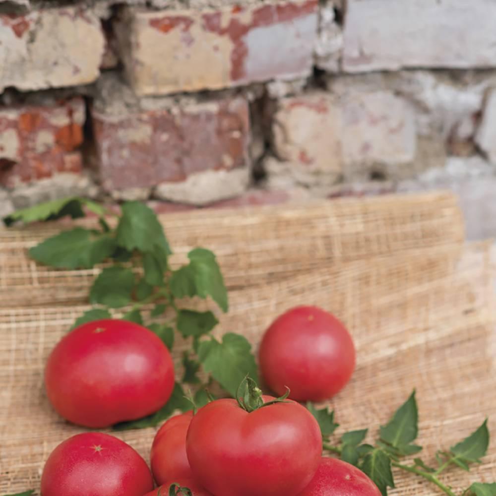 Безупречный ранний картофель «артемис»: описание сорта, фото, характеристика