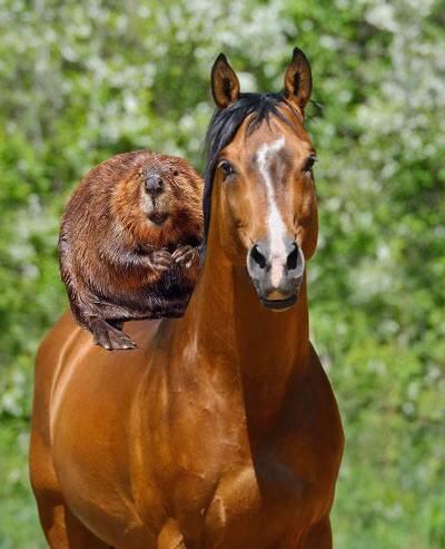 Самая дорогая лошадь в мире: характеристики влияющие на цену