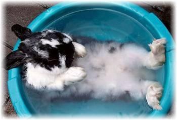Можно ли мыть кролика обычным шампунем