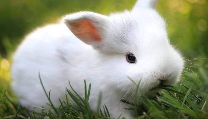 Чем полезна полынь для кроликов, правила и нормы кормления