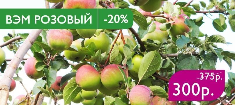 Скороплодная яблоня ветеран: описание, фото