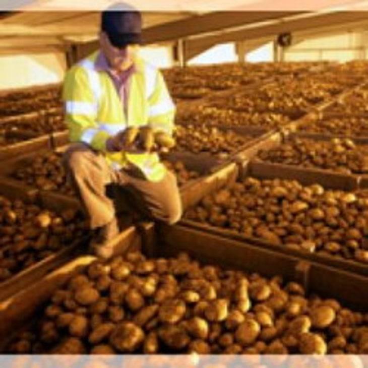 Вспоминаем опыт предков или как хранить картофель в буртах