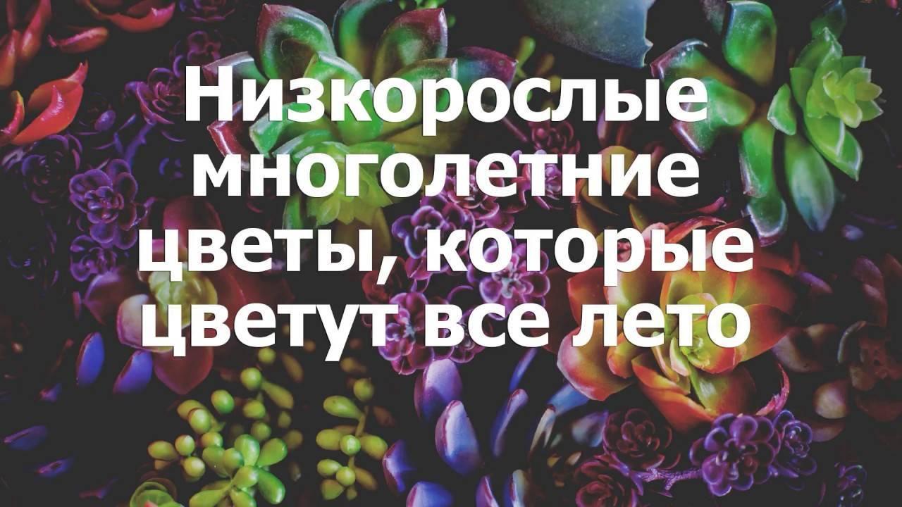 О многолетниках, цветущих все лето: названия многолетних цветов, посадка и уход