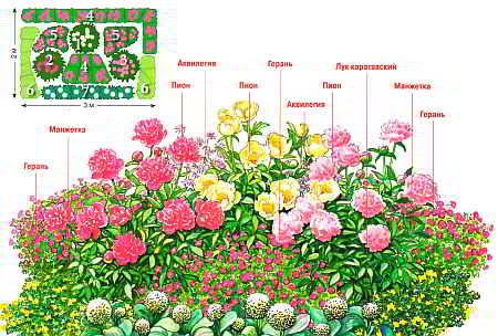 Как посадить пионы для ландшафтного дизайна участка?