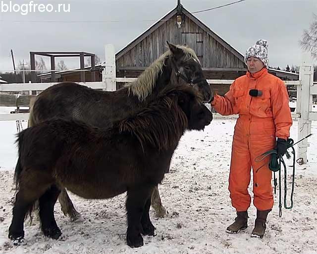 Содержание лошади в год
