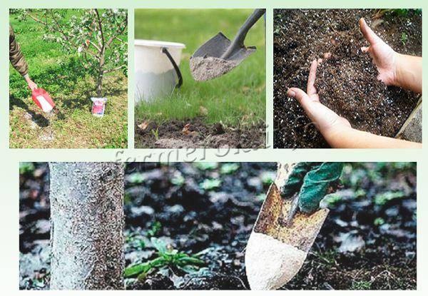 Подкормка вишни для повышения урожайности