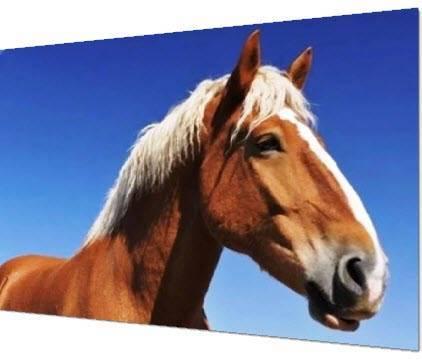 Сколько лет живут лошади дома и в дикой природе
