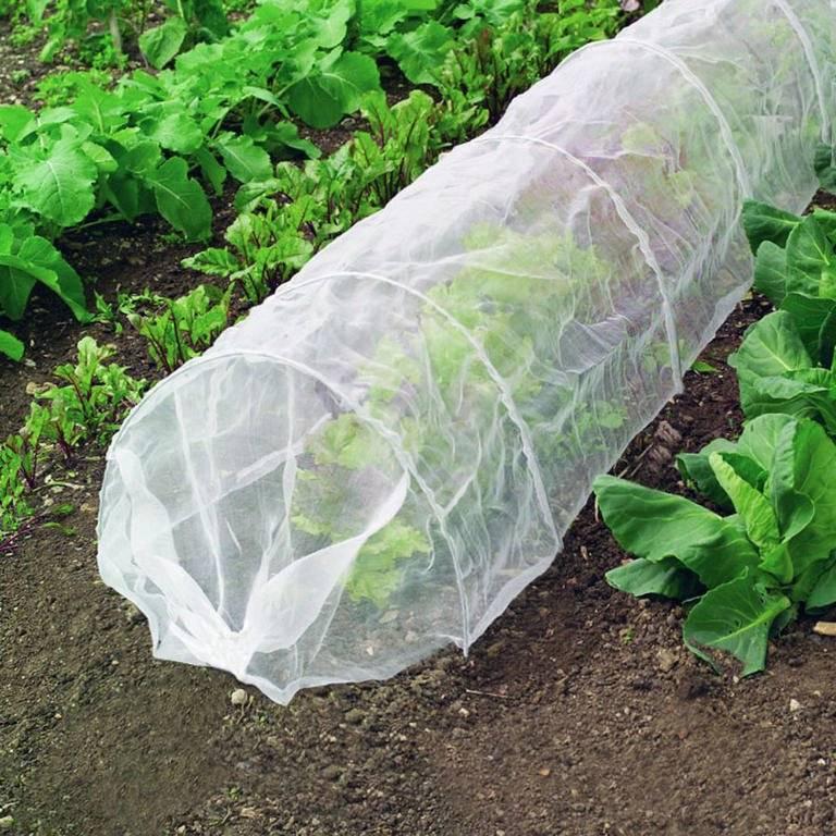 3 причины выращивать огурцы под укрывным материалом