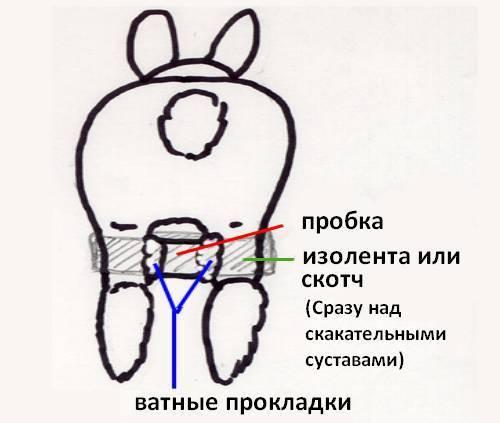 Кролик не ест и не пьет — что делать