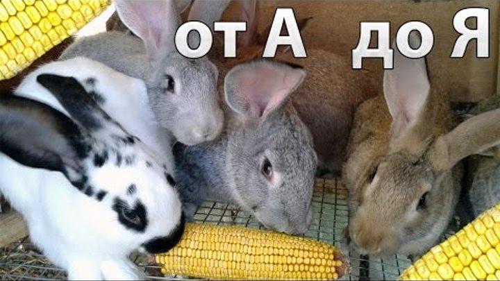 Комбикорм для кроликов своими руками: рецепт лучших составов