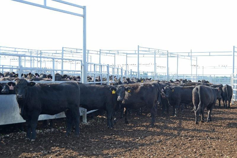 Ферма крс: управление стадом