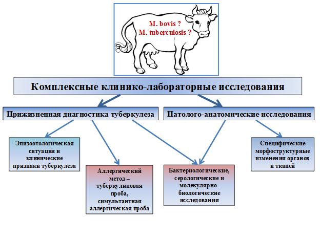 Статьи о ветеринарии крс на korovainfo.ru | как защитить крупный рогатый скот от туберкулеза?